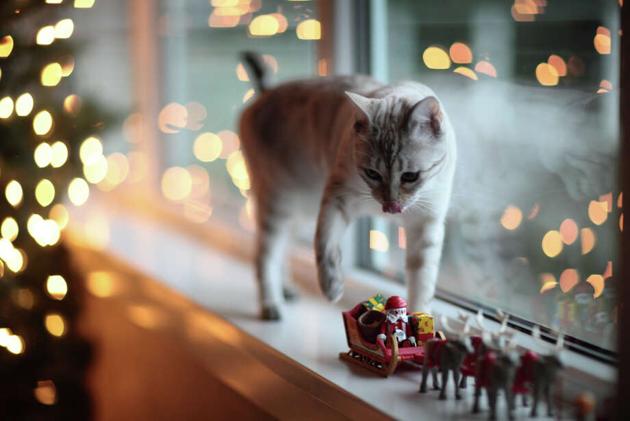"""You don't want me to play with your decorations, but you insist on putting them where I walk."" Photo: Lecia Wolf Phinney, Getty Images / Flickr RF"
