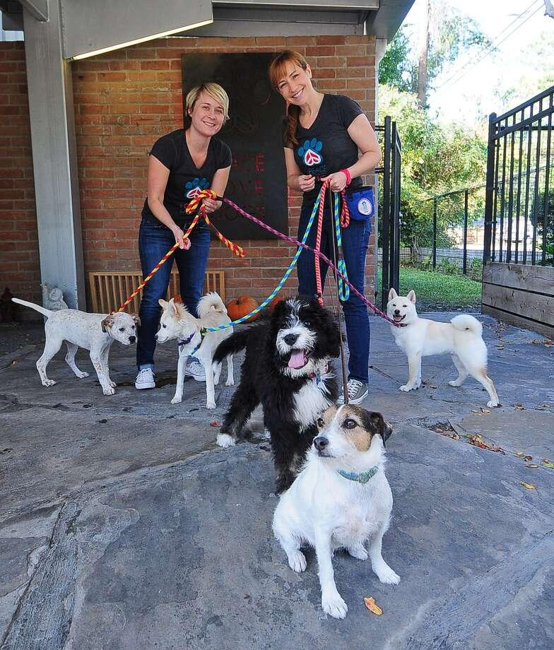 "Anna Foster, left, and Stephanie Bennett prepare to exercise dogs at their ""Peace Love and Dogs"" pet daycare. Photo: Â Tony Bullard 2013, Freelance Photographer / © Tony Bullard & the Houston Chronicle"