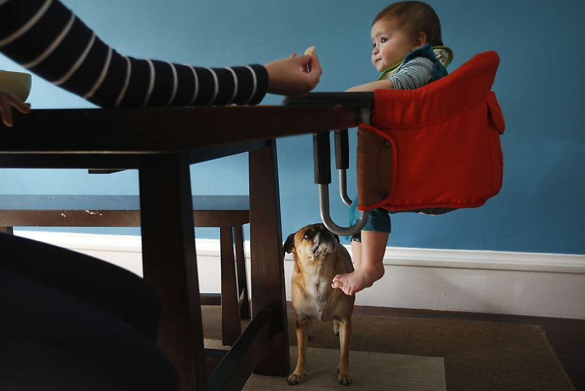 Rachel Rosenblum offers lunch to her daughter Fiona, 9 months, while their dog Mrs. Pickles, watches intently December 21, 2013 at their home in San Francisco, Calif. The Rosenblum's got Mrs. Pickles two years ago, before their second daughter was born. As a result the two girls have lived with the indoor-outdoor dog most of their lives.
