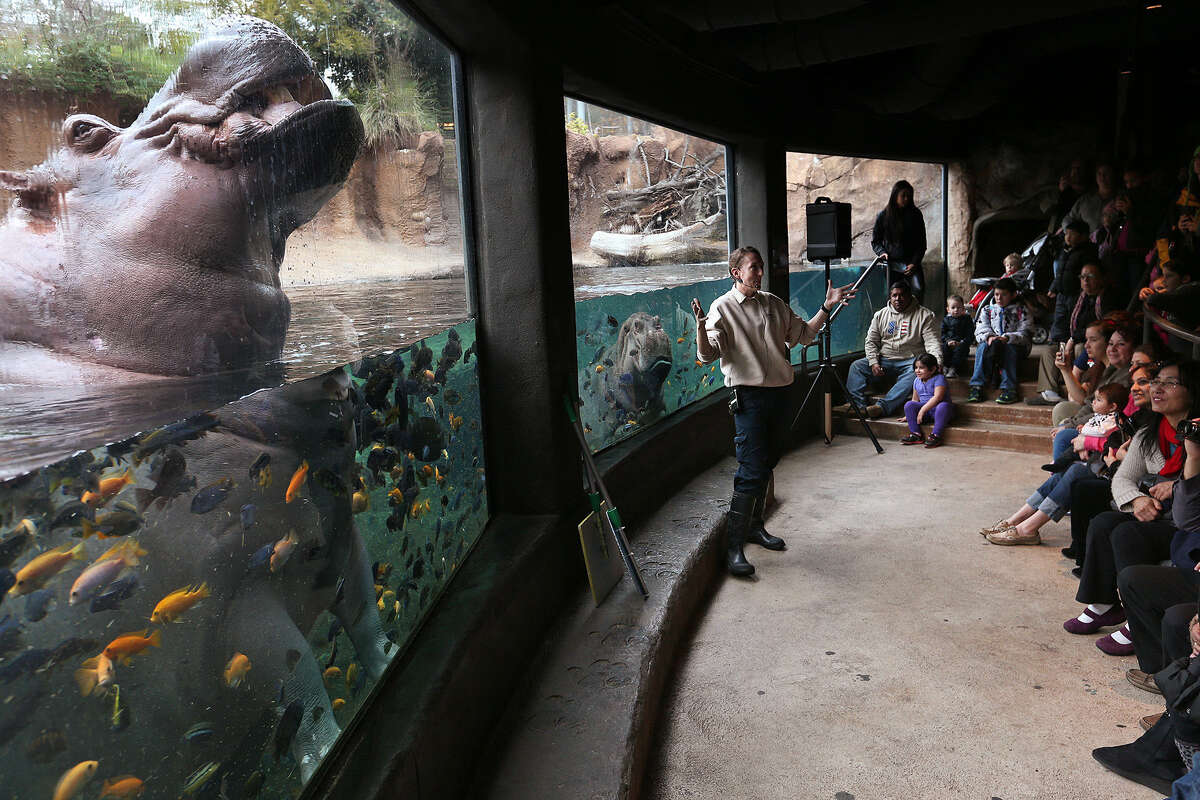The San Antonio Zoo will have exotic decorations and a seasonal soundscape from Nov. 19 through Jan. 1.