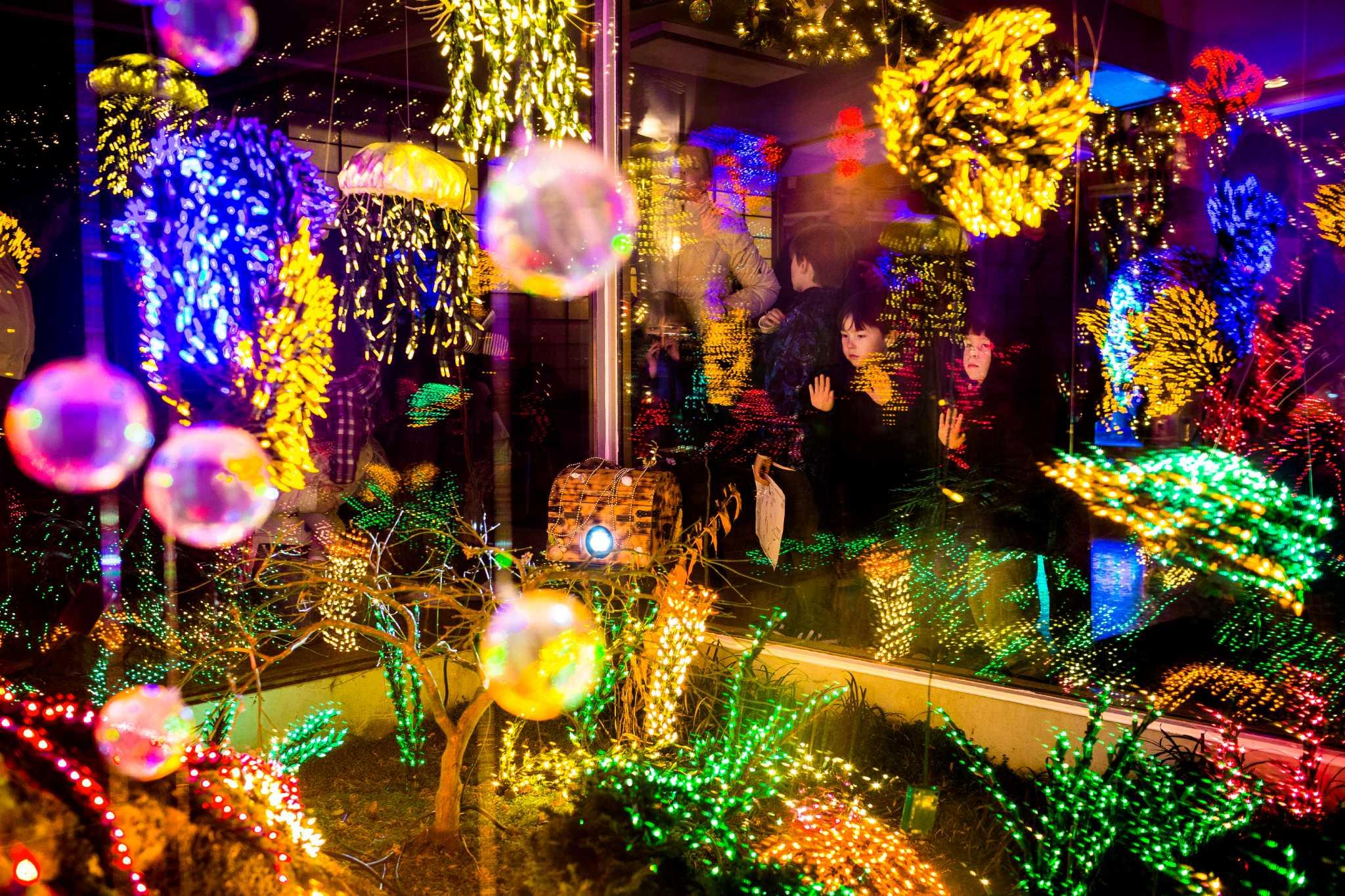 Garden d lights at the bellevue botanical garden for Bellevue botanical garden lights