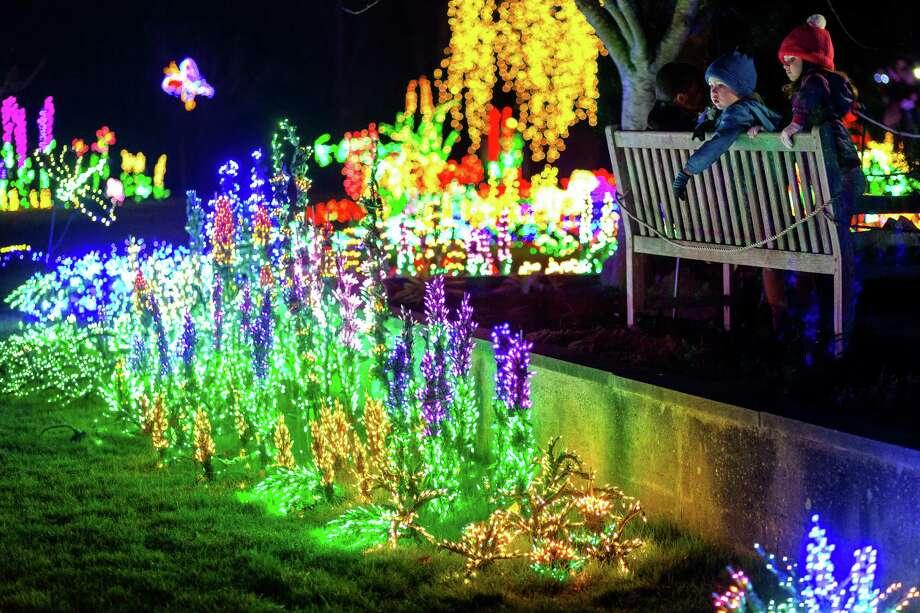 Garden d lights at the bellevue botanical garden houston chronicle for Bellevue botanical garden lights