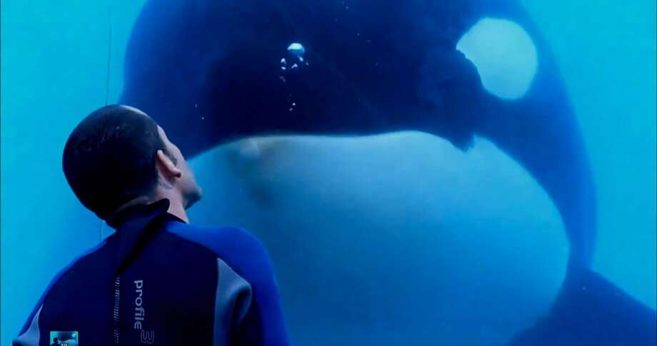 16. BLACKFISH: Gabriela Cowperthwaite makes an emotion-filled but still clinical argument against keeping whales in captivity, carefully dissecting the tragedies surrounding a SeaWorld orca. Photo: Magnolia Pictures