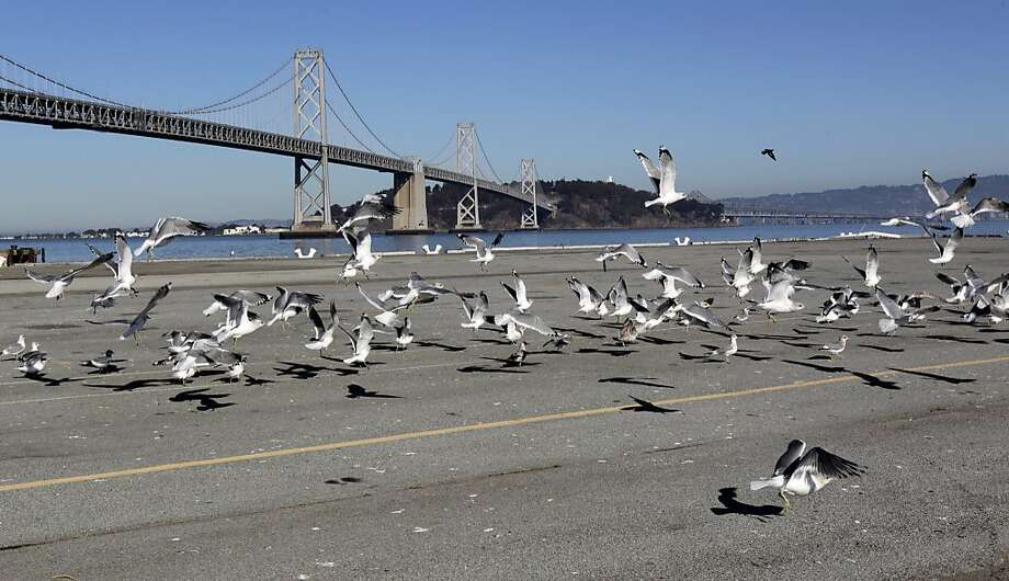 Seagulls congregate on Piers 30-32 in San Francisco. The site was preferred by the Golden State Warriors as a possible location for a new sports arena. Photo: Paul Chinn, The Chronicle