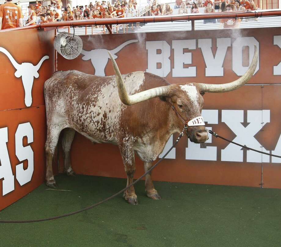 14 things you didn't know about BevoBevo XIV, the University of Texas at Austin mascot since 2004, has died after fighting a life-threatening illness. The longhorn steer has a long history at the state university. Here are 14 things you should know about Bevo XIV and his predecessors.h/t Daily Texan; University of Texas Photo: Joe Robbins, Getty Images / 2013 Joe Robbins