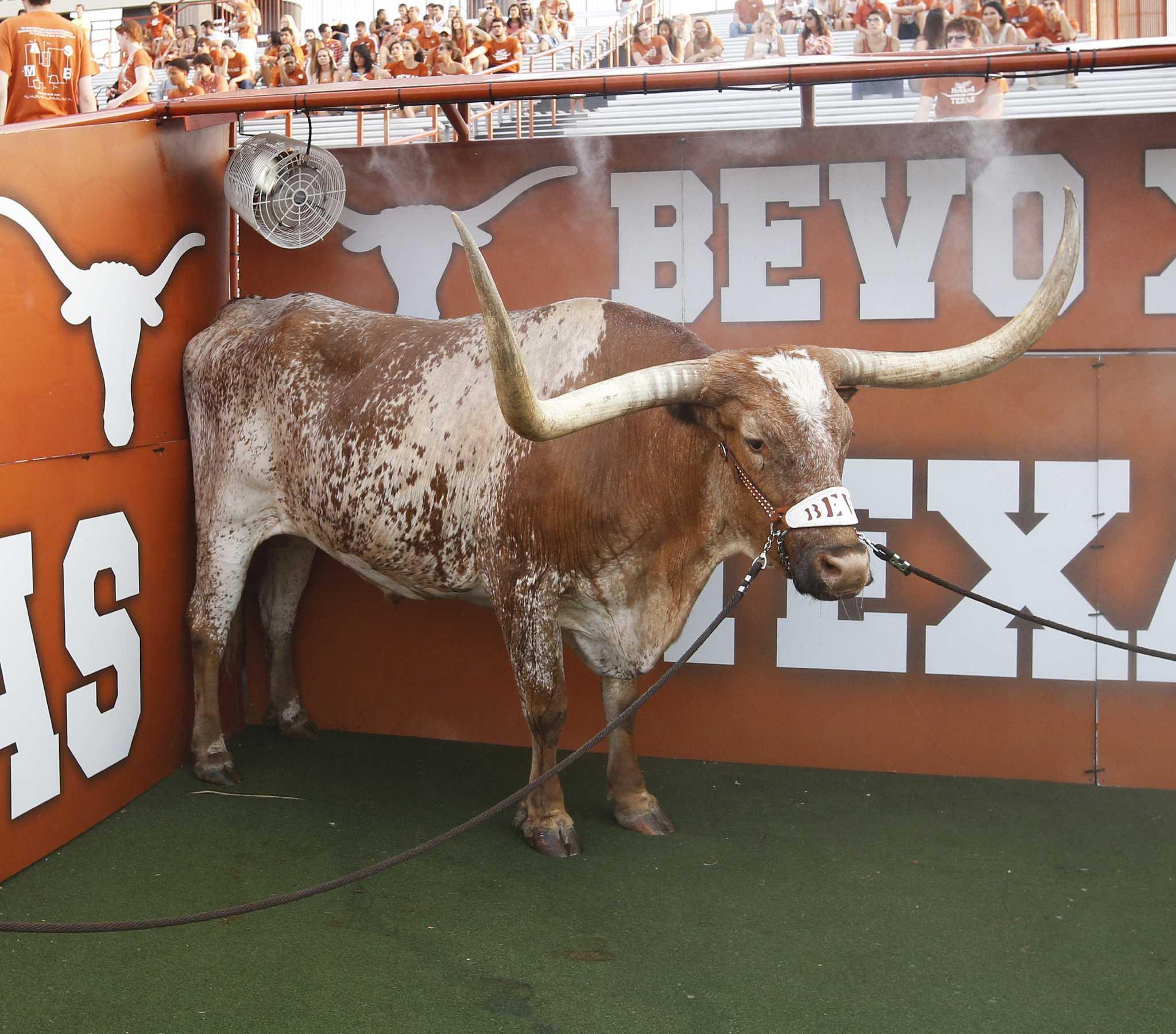 University Of Texas Mascot >> University Of Texas Mascot Bevo Xiv Retires After Cancer Diagnosis