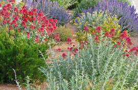 High Country Gardens, specializing in drought-tolerant plants, sells pre-planned gardens such as the Inferno Strip Garden intended for difficult spots alongside a garage or sidewalk. www.highcountrygardens.com.