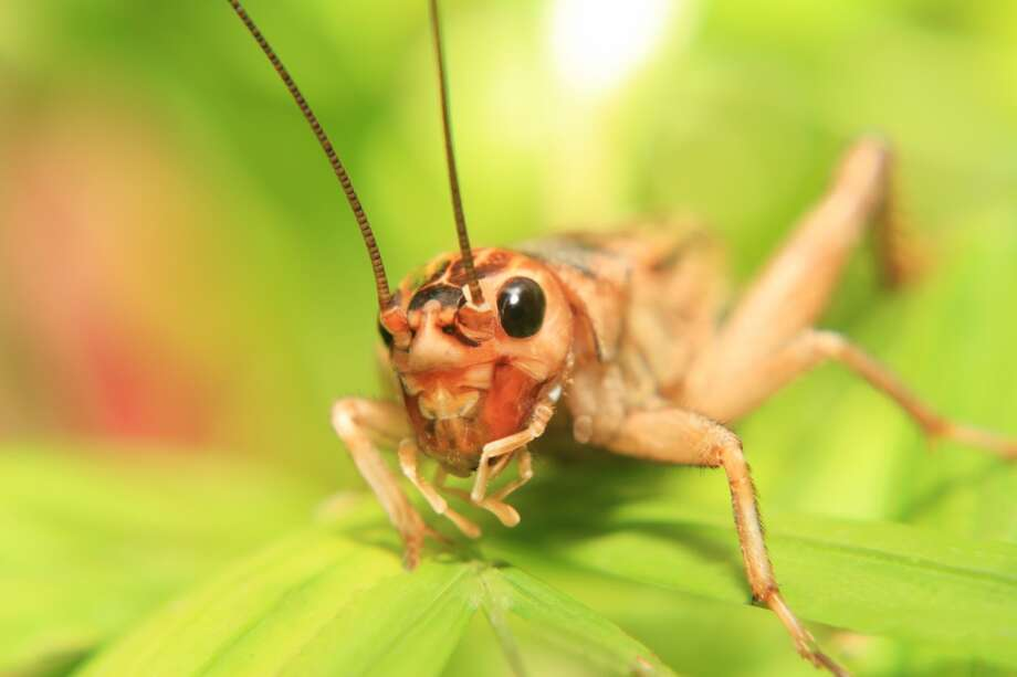 "Cricket:  Busy Philipps and Marc Silverstein welcome their daughter Cricket Pearl Silverstein on July 2, 2013. The media attacked the actress and she tweeted: ""It's weird people think my kids will be in therapy because of their names. Guys, my kids will be in therapy for LOTS of reasons, I'm sure."" Photo: Kerstin Klaassen, Kerstin Klaassen / Vetta / Getty"