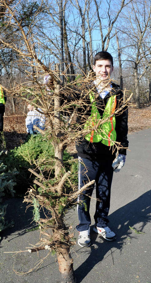 Westport Eagle Scout Ryan Ruggiano shows what Christmas trees will look like if left in a property owner's backyard for too long. The Boy Scouts are collecting trees in Westport on Jan. 11. Photo: Contributed Photo / Westport News