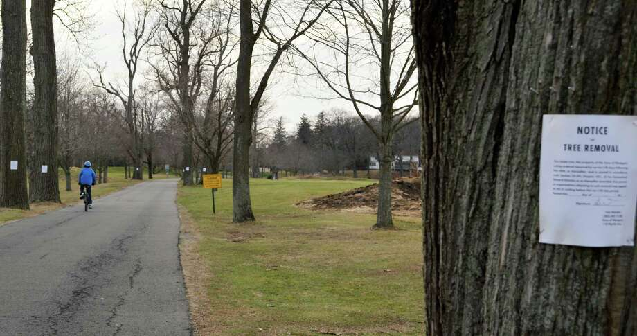 First Selectman Jim Marpe has delayed, at least temporarily, a plan to cut down 15 of the large trees lining the Longshore Park driveway until there has been a public review of the proposal. Photo: Jarret Liotta / Westport News contributed