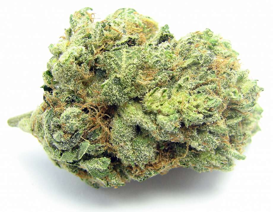 3) Larry OG OG Kush's reign at the top of the list makes room for offshoots like Larry OG - a more tart, and indica version of classic OG Kush. Photo: Picasa