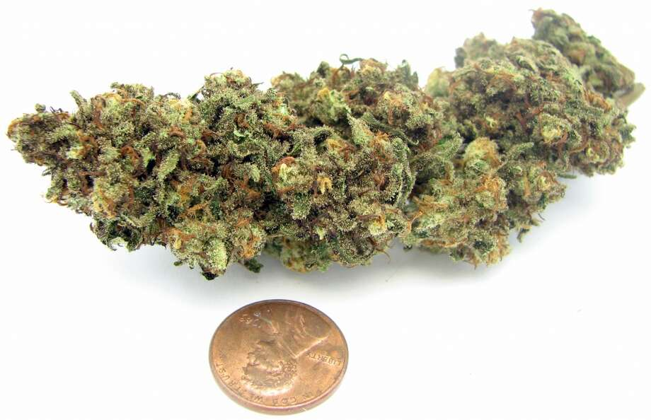 6) Black Jack Another classic strain Jack Herer continued to evolve and this year met trendy African import Black Congolese to form Black Jack. Crazy huge size. Surprisingly energetic and focused effects. Photo: Picasa