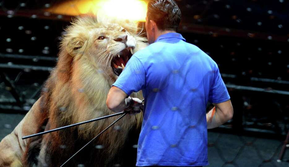 Big cat trainer and presenter Alexander Lacey gives a special seminar on