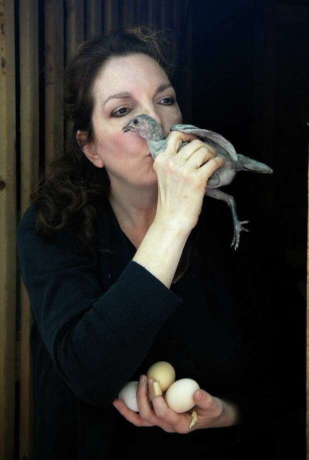 Melina Brown gives a baby chicken that she's hatched a kiss after gathering eggs on Monday September 16, 2013. Brown raises chickens, turkeys and other birds at her home in Stamford, Conn. and sells the eggs. Photo: Dru Nadler / Stamford Advocate Freelance