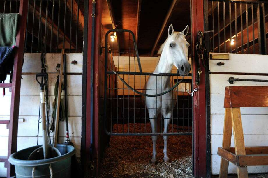 Wally, a pony, stands tall at Country Lane Farm's John Street Barn in backcountry Greenwich.  Christina and Fred Schauder, owners of Country Lane, have been giving lessons about riding and life at the farm for more than 20 years. Photo: Helen Neafsey / Greenwich Time