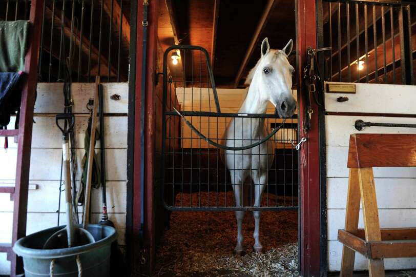 Wally, a pony, stands tall at Country Lane Farm's John Street Barn in backcountry Greenwich.  Christ
