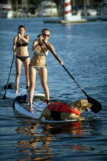Natalie Titova Campos, her dog, Kenbol, and Alena Matveeva use paddleboards rented from Young Marine