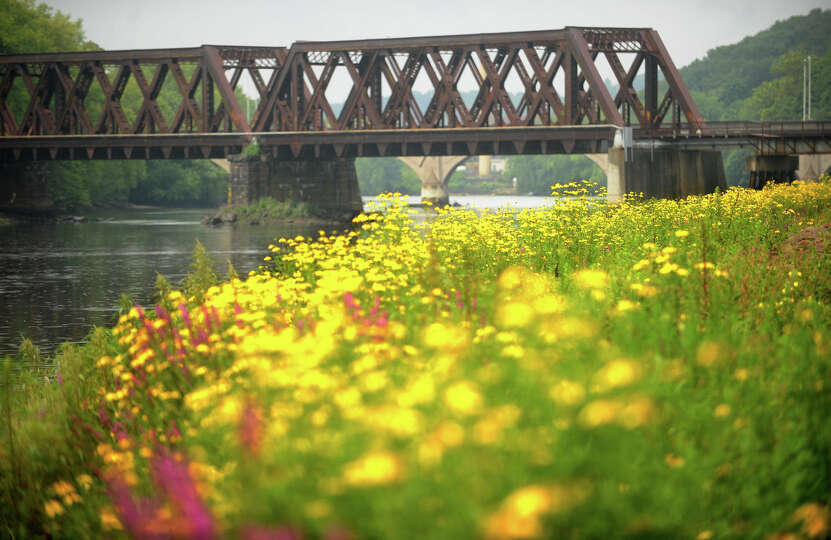 Wildflowers bloom along the banks of the Housatonic River in Derby on Tuesday, August 13, 2013.