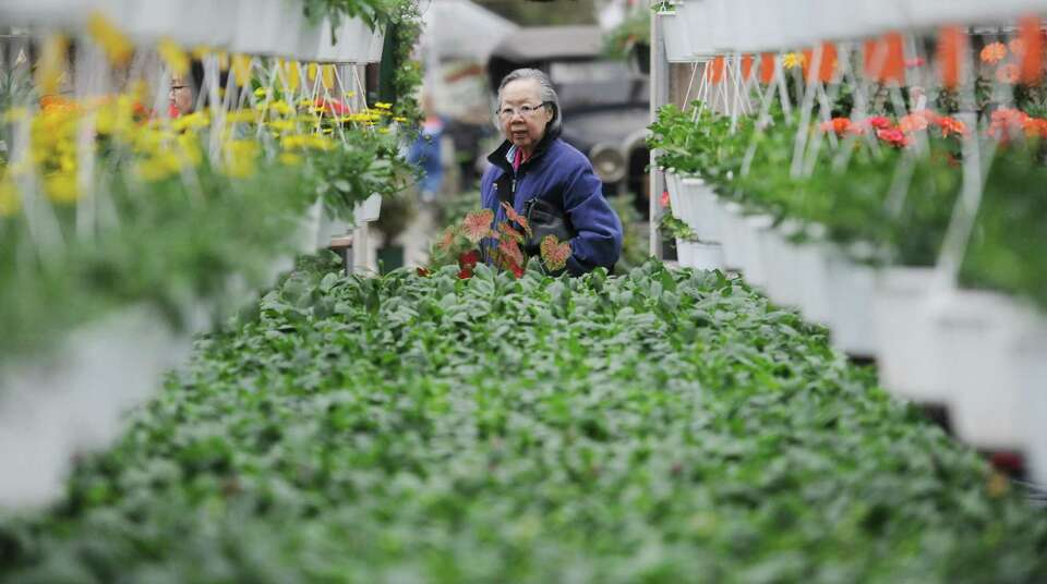 Deborah Holt, of Bethel, looks at a row of flowers and plants in a greenhouse at the 2013 Spring Gar