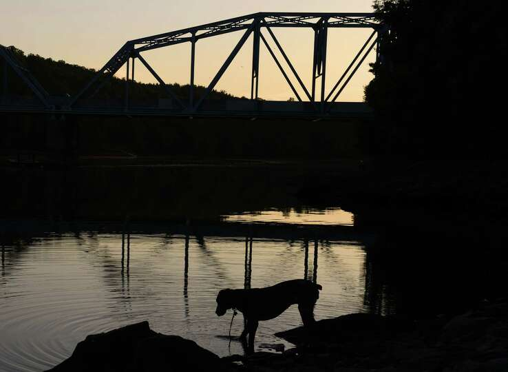 Cassie, a Great Dane from New Haven, takes a drink from Lake Lillinonah as police and search groups