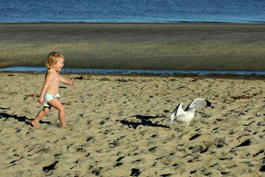 Clad in just her diaper, Alden Charette, age 2 1/2, chases a seagull around Greenwich Point Beach in Greenwich, Conn. on Monday, Nov. 18, 2013. The high temperature for the day was in the mid-60's making it feel a bit like summer.Tuesday is expected to be cooler with a high temperature in the mid-40's. Photo: Cathy Zuraw / Greenwich Time