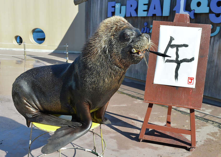 "Sea lion ""Jay"" paints a Chinese character reading ""the horse"" to practice his calligraphy as part of his New Year's Day attraction at the Hakkeijima Sea Paradise aquarium in Yokohama, suburban Tokyo on December 31, 2013. The event, marking the forthcoming Chinese lunar calendar ""Year of the Horse"", will be held as part of a New Year's attraction until the end of January. Photo: KAZUHIRO NOGI, AFP/Getty Images / 2013 AFP"
