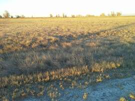 At the Sacramento National Wildlife Refuge Complex, all the vernal pools and seasonal wetlands on the flats are now dry and brown.