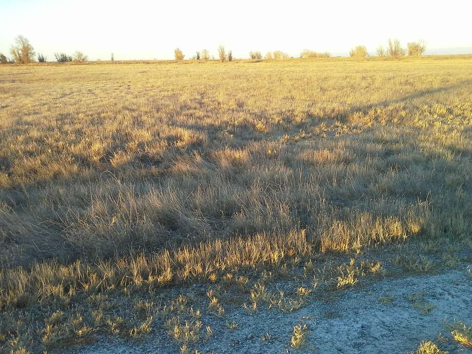 The Sacramento National Wildlife Refuge Complex, where millions of waterfowl choose to winter, is dry and brown. Photo: Tom Stienstra