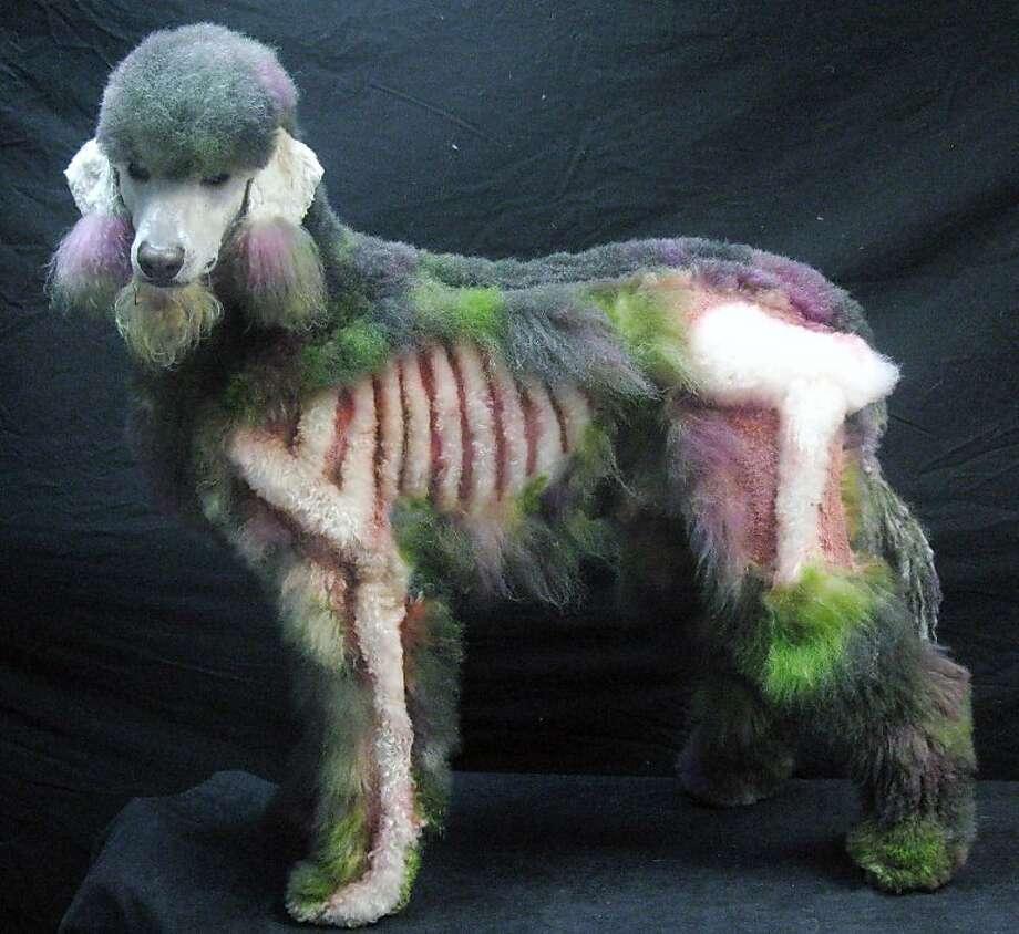 The wagging dead: Bored with the usual topiary-like poodle cuts? Turn Fifi into a zombie poodle like Xerxes, who was creatively 