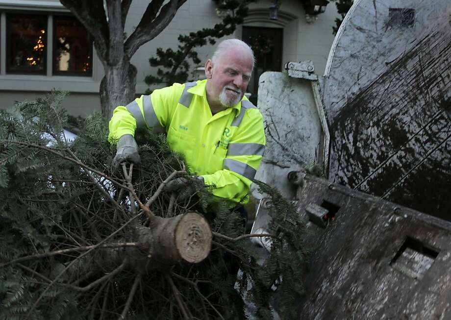 Mike Julian gathers discarded Christmas trees, as he has done for 25 years, in San Francisco's Sea Cliff neighborhood. Photo: Paul Chinn, The Chronicle