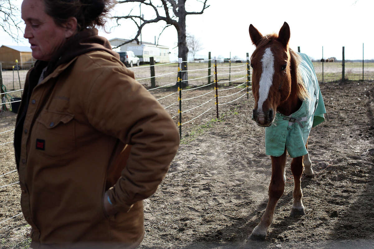Darla Cherry walks away from Crook, a surrendered horse who came to them starving and with a broken leg about a month ago, after having the veterinarian look at him at Meadow Haven Horse Rescue in Nixon on Thursday, January 2, 2014.