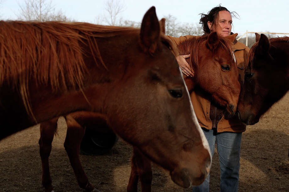 Darla Cherry spends time with a few of the 170 horses living at Meadow Haven Horse Rescue in Nixon on Thursday, January 2, 2014. In addition to the horses 11 donkeys live there. Photo: Lisa Krantz, San Antonio Express-News / San Antonio Express-News