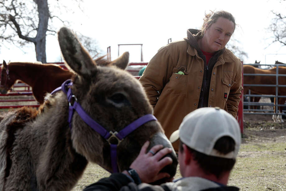 Darla Cherry watches as veterinary technician Klint Kahn examines Izzy, a donkey whose owner surrendered her to Meadow Haven Horse Rescue about a year ago, in Nixon on Thursday, January 2, 2014. Photo: Lisa Krantz, San Antonio Express-News / San Antonio Express-News