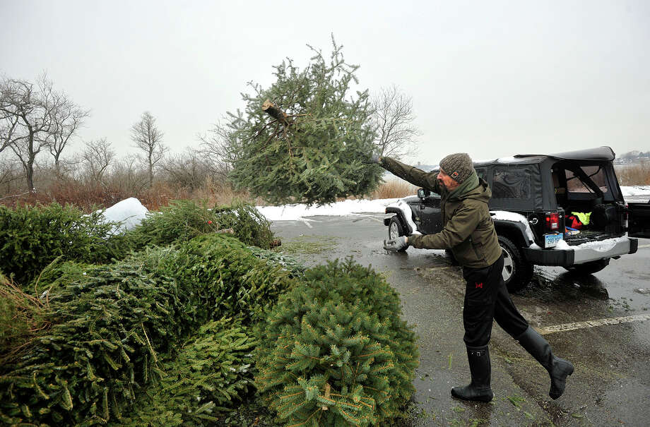 Stefan Mohr throws his Christmas tree in with others in a parking lot at Greenwich Point Park in Old Greenwich, Conn., on Sunday, Jan. 5, 2014. The Greenwich Town Parks and Recreation Department's Parks & Trees Division will recycle residentâÄôs trees by chipping them into mulch or compost to be used in parks for trails in woodlands, shrub beds, and soil stabilization. Photo: Jason Rearick / Stamford Advocate