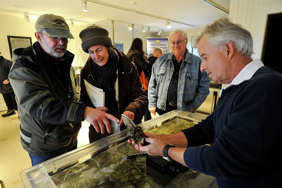 Commissioner Roger Bowgen, right, of the Greenwich Shellfish Commission, shows off different shellfish in the touch tank to Kip Burgweger, left, and his wife, Kath Burgweger, and Rick Holz during First Sunday Science at the Bruce Museum's Seaside Center in Greenwich Point Park in Old Greenwich, Conn., on Sunday, Jan. 5, 2014. Photo: Jason Rearick / Stamford Advocate
