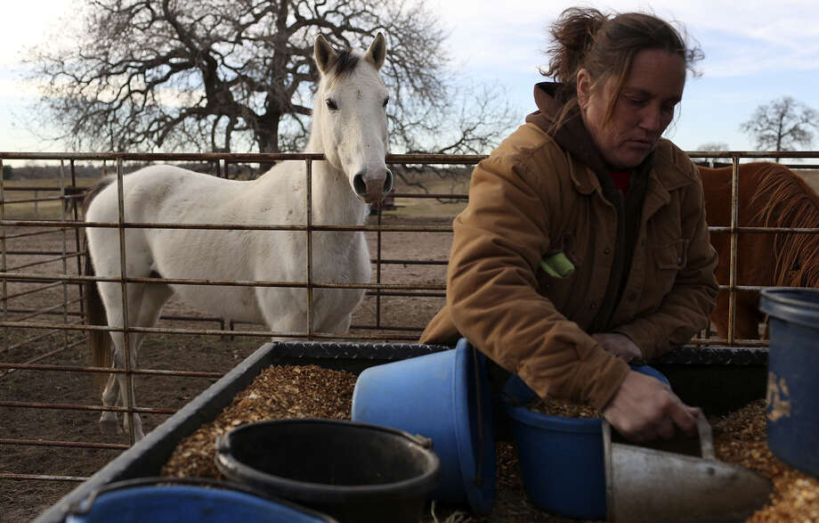 Darla Cherry, president of Meadow Haven Horse Rescue, distributes feed for some of the 170 horses at the sanctuary in Nixon. Photo: Lisa Krantz / San Antonio Express-News / San Antonio Express-News
