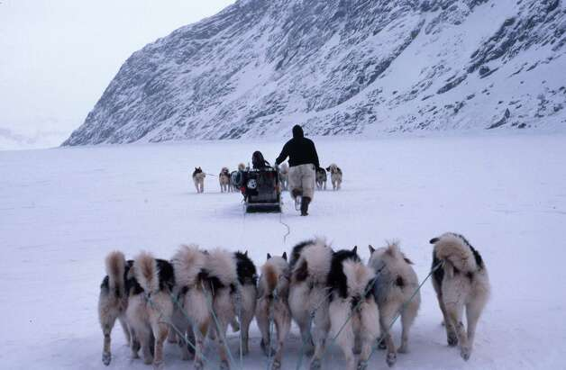 Dogs pulling sleds on Greenland fan out rather than go single file, as in Alaska, because trees do not interrupt the travel. Even so, the team follows a lead dog, the one with the alpha personality. Photo: Photos Courtesy Jonathan Calvert / Pentagram