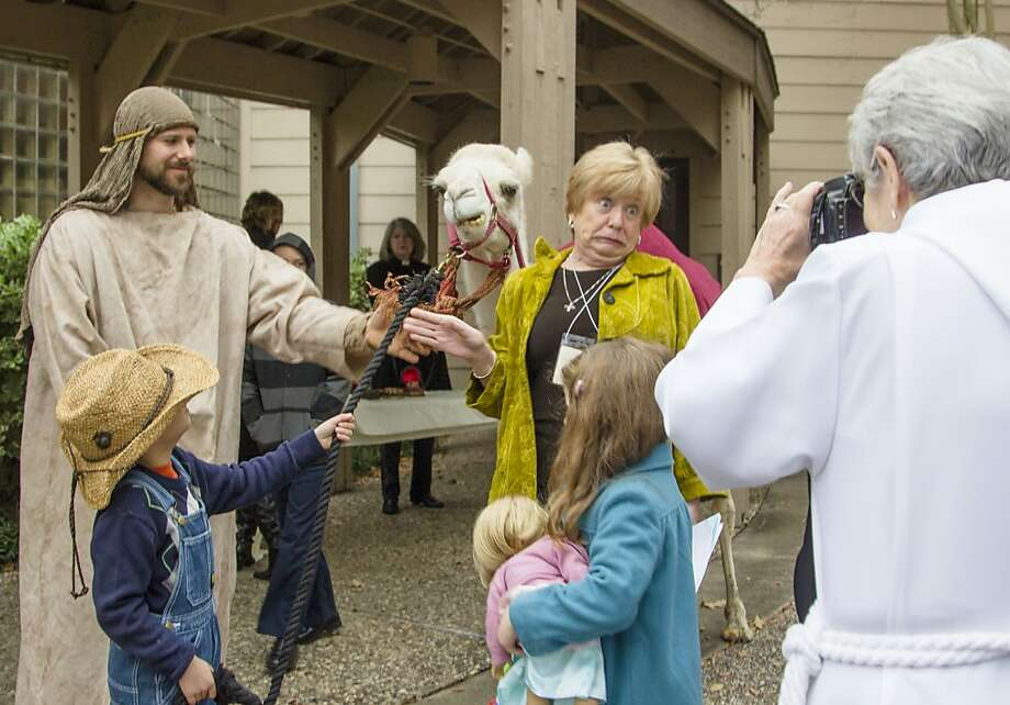 Making an ungulate face:Trinity Episcopal Church celebrates the Epiphany in The Woodlands, Texas, with actual camels and wise men available for photo ops. Photo: Ana Ramirez, Associated Press