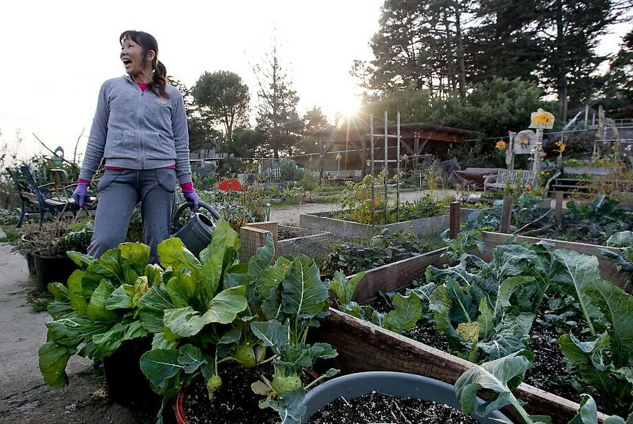 Feng Jeng Li tends to plants at the Brooks Park Community Garden, which turned a trash-covered park into a place of community and fresh produce in the Ingleside Heights area of San Francisco. Photo: Michael Macor, The Chronicle