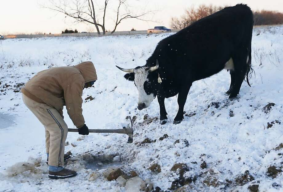 Farmer Randy Cree chops a hole in the ice while a cow waits to drink water from a pond near Big Springs, Kan., Monday, Jan. 6, 2014. (AP Photo/Orlin Wagner) Photo: Orlin Wagner, Associated Press