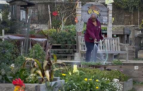 2014 resolution: S F  urban garden expansion - SFGate