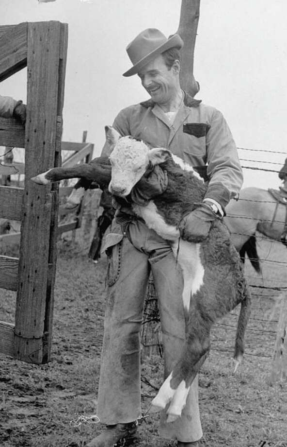 Ranch owner M. H. W. Ritchie is pictured holding calf and smiling.  (Photo by Leonard Mccombe//Time Life Pictures/Getty Images) Photo: Leonard McCombe, Time & Life Pictures/Getty Image / Leonard Mccombe