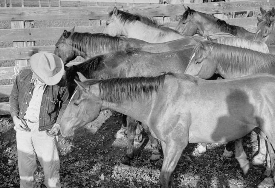 Cowboy Clarence H. Long offers a bit of food to horse.  (Photo by Leonard Mccombe//Time Life Pictures/Getty Images) Photo: Leonard McCombe, Time & Life Pictures/Getty Image / Leonard Mccombe