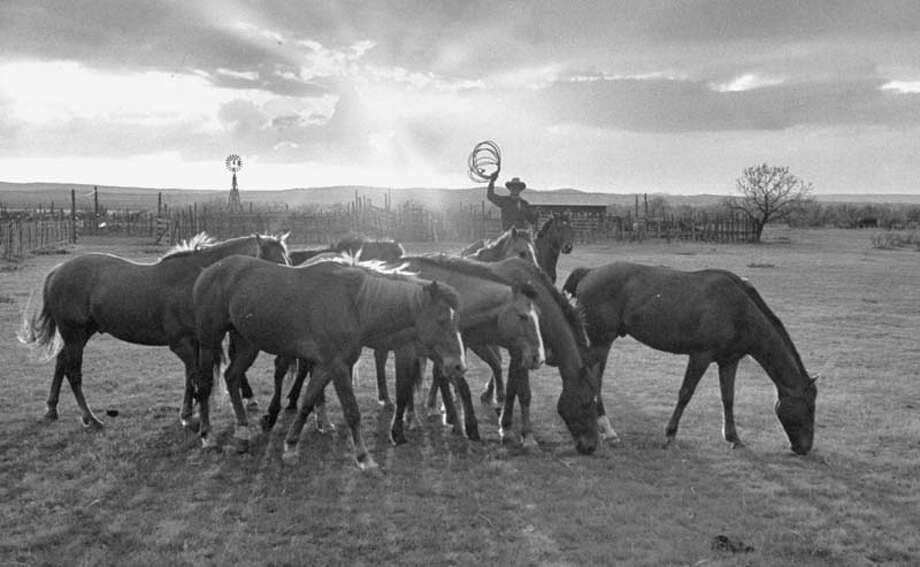 Cowboy Clarence H. Long is pictured collecting his string of horses at sunset.  (Photo by Leonard Mccombe//Time Life Pictures/Getty Images) Photo: Leonard McCombe, Time & Life Pictures/Getty Image / Leonard Mccombe