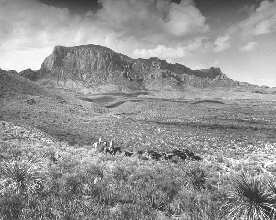 Cowboys round up cattle with mountains in the backgroud near Big Bend National Park.  (Photo by Alfred Eisenstaedt/Pix Inc./Time Life Pictures/Getty Images) Photo: Alfred Eisenstaedt, Time & Life Pictures/Getty Image / Time Life Pictures