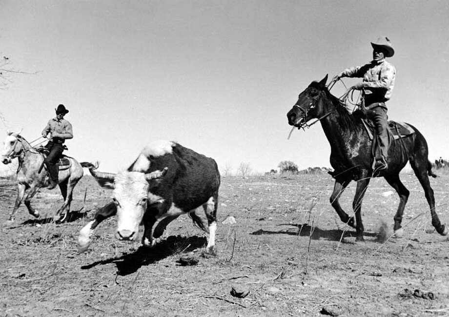 A cowboy on horseback prepares to rope a steer during a cattle roundup on a ranch in Duval County.  (Photo by Carl Mydans/Time & Life Pictures/Getty Images) Photo: Carl Mydans, Time & Life Pictures/Getty Image / Time & Life Pictures/Getty Images