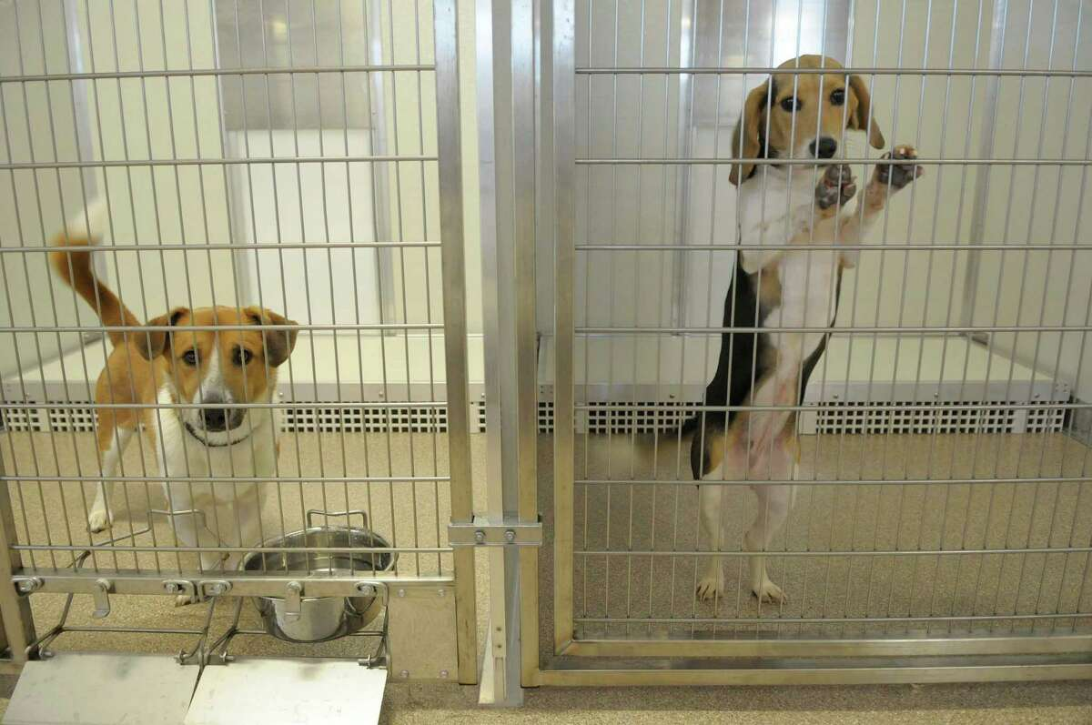 Dogs peer through their cages at the new Saratoga County Animal Shelter in Milton, NY on Thursday, Oct. 7, 2010. The new shelter is a huge improvement over the older facility. (Paul Buckowski / Times Union)
