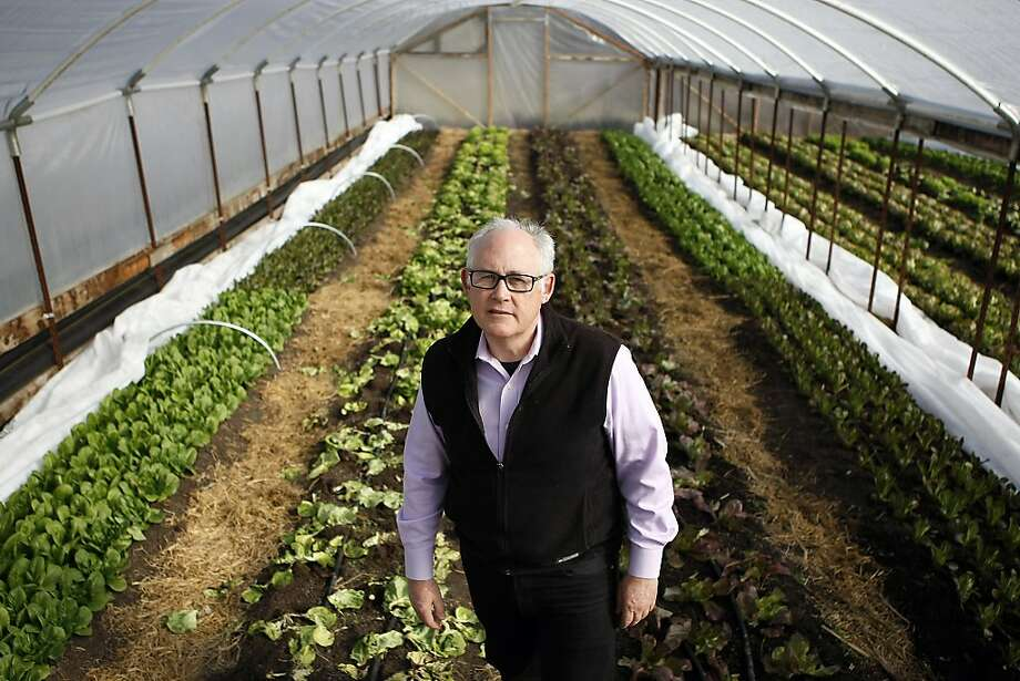 Michael Dimock, the strategic adviser for the new California Food Policy Council, visits a greenhouse at Singing Frogs Farm in Sebastopol. Dimock and his colleagues on the council intend to inform voters and push legislators on food policy issues. Photo: Michael Short, The Chronicle