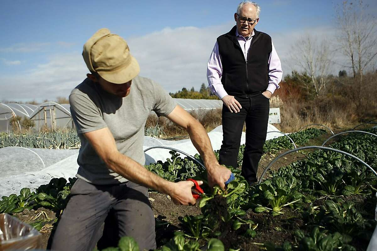 Michael Dimock, right, strategic adviser for the new California Food Policy Council, watches as farm employee Marty Renner picks Asian Tatsoi at Singing Frogs Farm in Sebastopol, CA, Tuesday, January 7, 2014.