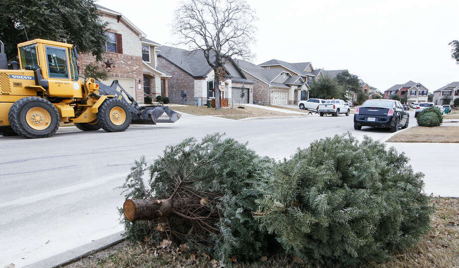 Discarded Christmas trees dot the landscape in Boerne's Herff Ranch subdivision and await pick up on Monday. Photo: Photos By Marvin Pfeiffer / Northwest Weekly / Prime Time Newspapers 2014